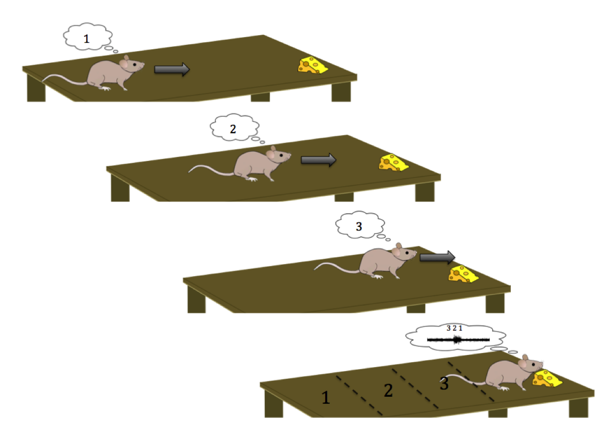 Testing Place Cells in Rats