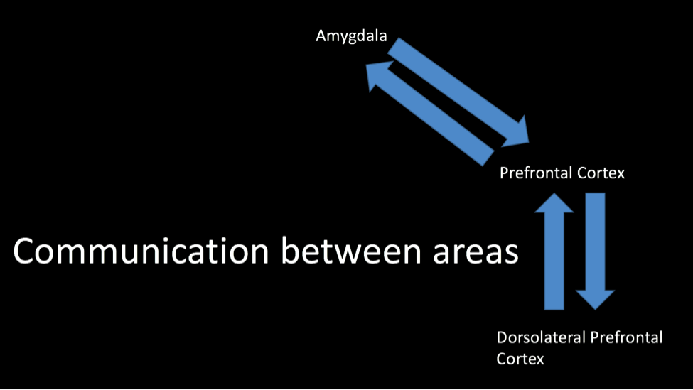 neural-communication
